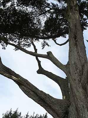 arbre sol calcaire