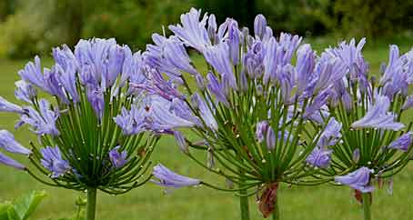 Mes vivaces inratables longue floraison pour soleil ou for Plante qui aime l ombre