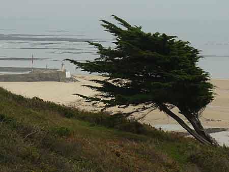 Protection contre le vent dans un jardin du bord de mer - Plantes bord de mer atlantique ...