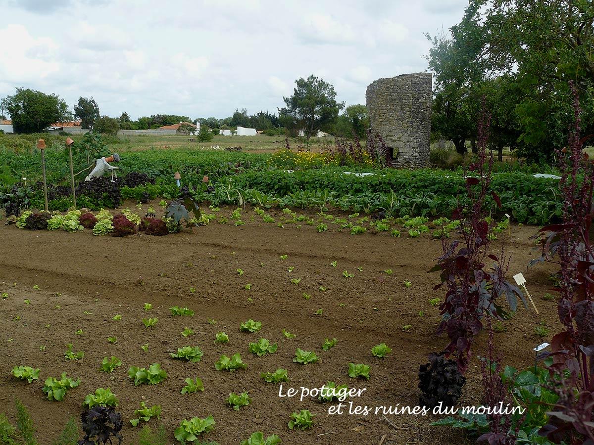 Le jardin de michel machecoul 44 arrosoirs et s cateurs for Jardin 44