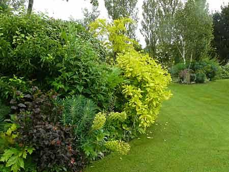 Pourquoi des arbustes bouche trous arrosoirs et for Arbre de jardin pour ombre
