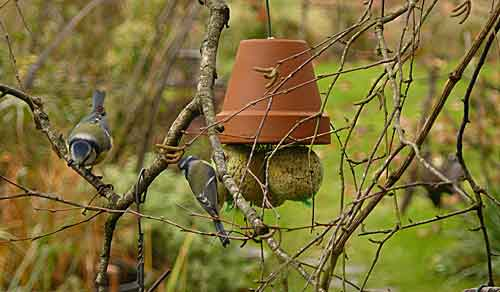 Les oiseaux vous y pensez arrosoirs et s cateurs - Support boule de graisse pour oiseaux ...