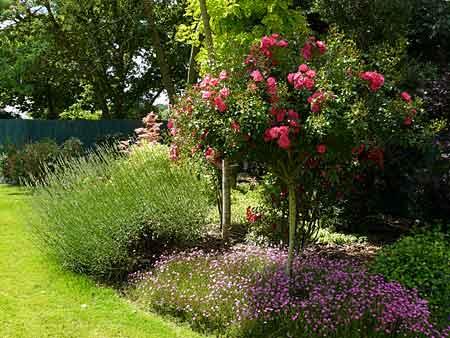 Le jardin de Cathy à Ploërmel (56) - Arrosoirs et Sécateurs