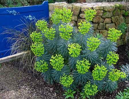 Mes vivaces inratables longue floraison et beau for Plante exterieur feuillage persistant