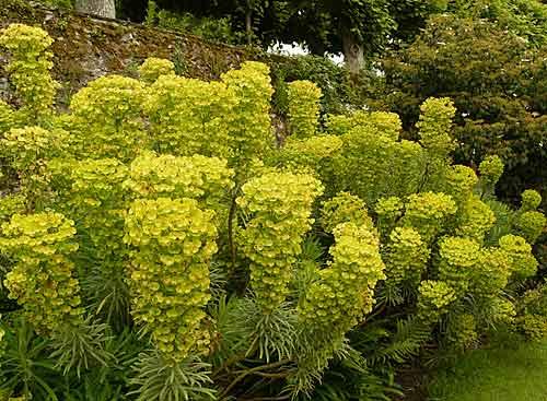 Des vivaces longue floraison printemps arrosoirs et s cateurs - Fleurs vivaces longue floraison ...