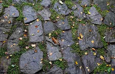 Chronique d un jardin de bretagne sud en novembre 2011 - Quand mettre du fumier de cheval dans le jardin ...