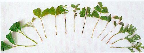 plante grimpante bouture