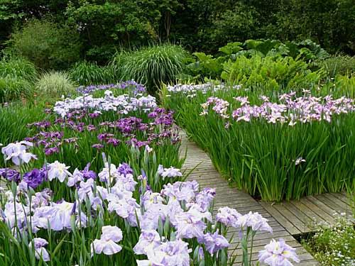 Les iris arrosoirs et s cateurs for Aubade jardin d iris
