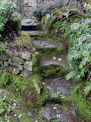 Escaliers de jardin - Arrosoirs et Sécateurs
