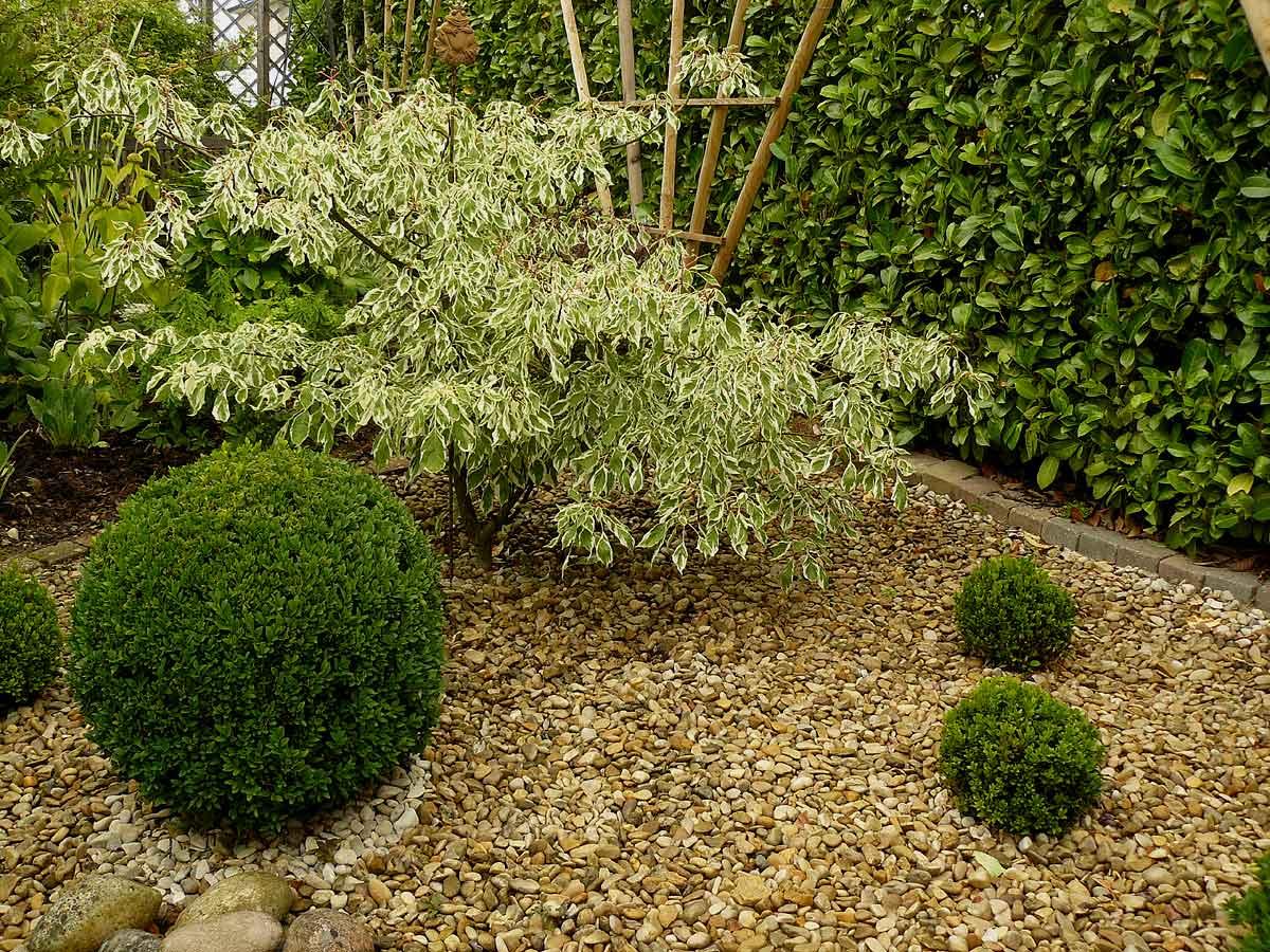 Le jardin des grandes vignes 25 arrosoirs et s cateurs - Bassin plantes oxygenantes besancon ...