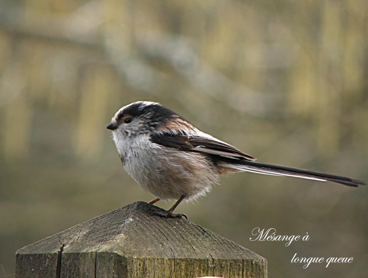 Des oiseaux dans nos jardins arrosoirs et s cateurs - Natagora oiseaux de nos jardins ...