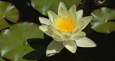 Des mots pour les plantes arrosoirs et s cateurs - Plantes qui poussent dans l eau ...