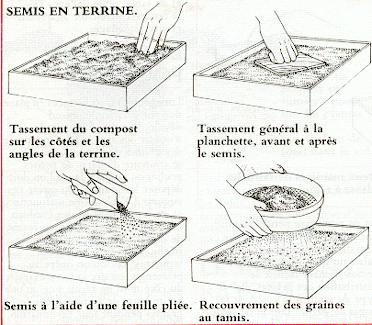 Techniques de semis des vivaces arrosoirs et s cateurs - Semer a la volee ...