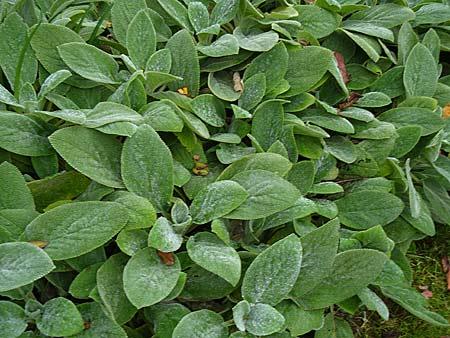 Mes vivaces inratables feuillage persistant jardin d for Achat plantes vivaces pas cher
