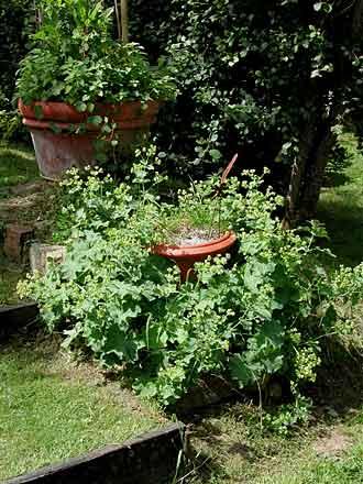 Les jardins de la maubrairie chez st phane marie - Office du tourisme barneville carteret ...