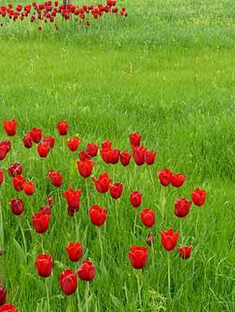 La couleur rouge arrosoirs et s cateurs - Couleur complementaire du vert ...