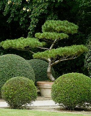 Les jardins d yves breneli re machecoul 44 arrosoirs for Arbuste jardin japonais